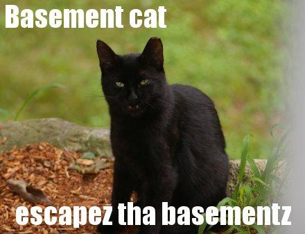 http://www.donnamdube.com/feral%20cats/devilcat.jpg